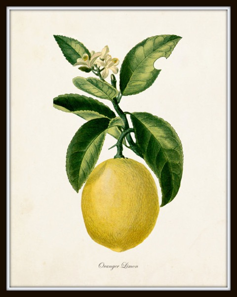 lemon-etsy